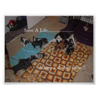 Adopt a shelter baby! print