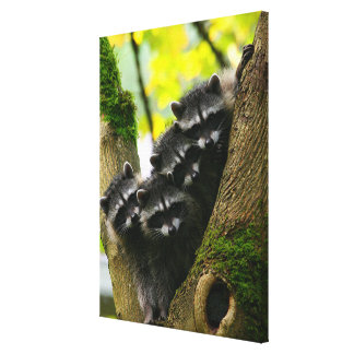 Adorable Baby Raccoons Canvas Print