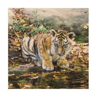 Adorable Baby Tiger Cub Wood Print