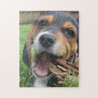 Adorable Beagle Puppy Chewing on Wood Puzzle