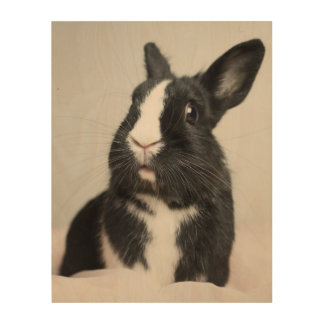 Adorable Black and White Bunny Rabbit Wood Print