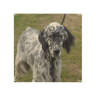 Adorable Black and White English Setter Wood Wall Art