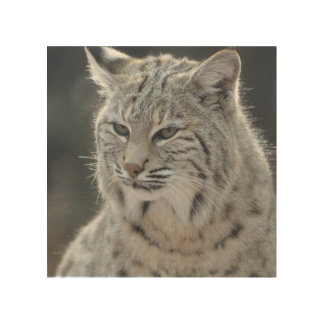 Adorable Bobcat Wood Wall Art