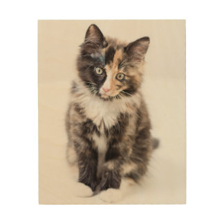Adorable Calico Kitten Wood Prints