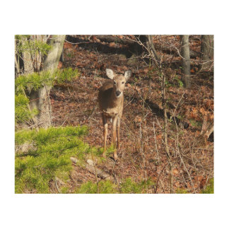 Adorable Deer in the Woods Nature Photography Wood Print