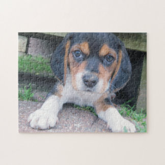 Adorable Dirty Nose Beagle Pup Jigsaw Puzzle