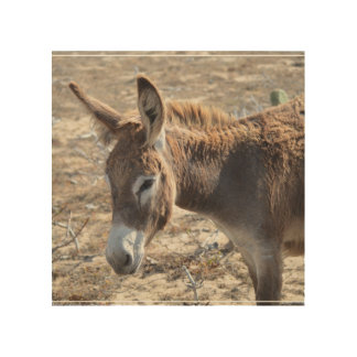 Adorable Donkey Wood Prints