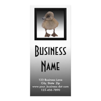 Adorable Gray Duckling Photograph Customised Rack Card