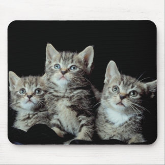Adorable Kittens Mousepads