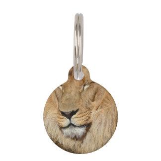 Adorable Lion Pet Name Tags