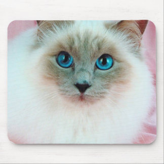 Adorable Siamese Cat 1 Mouse Mats