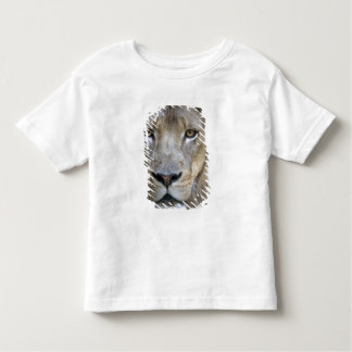 Adult male lion at the Sacramento Zoo, CA Toddler T-Shirt
