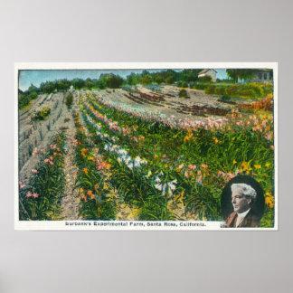 Aerial View of Burbanks Experimental Farm Poster