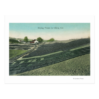 Aerial View of Prunes Drying in the Sun Postcard