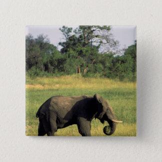 Africa, Botswana, Chobe National Park. Elephant 15 Cm Square Badge