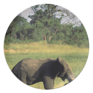 Africa, Botswana, Chobe National Park. Elephant Plate