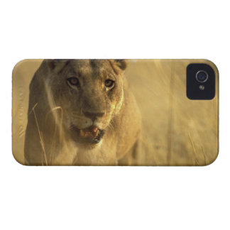 Africa, Botswana, Moremi Game Reserve, Lioness Case-Mate iPhone 4 Case