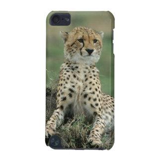 Africa, Kenya, Cheetahs iPod Touch 5G Cases