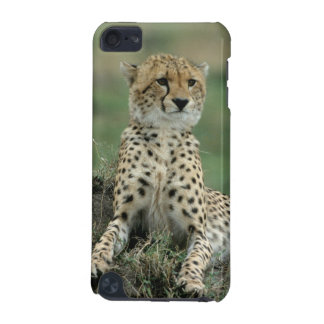 Africa, Kenya, Cheetahs iPod Touch 5G Cover