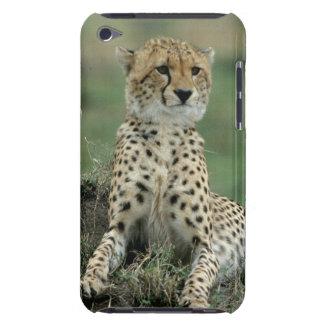 Africa, Kenya, Cheetahs iPod Touch Cases