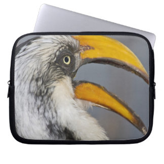 Africa. Kenya. Eastern Yellow-billed Hornbill at Laptop Sleeve