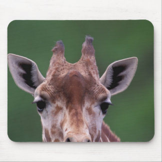 Africa, Kenya, Impala Ranch. Reticulated Mouse Pad