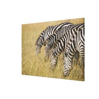 Africa, Kenya, Maasai Mara Canvas Print