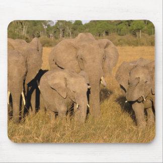 Africa, Kenya, Masai Mara. African Elephant Mouse Pad