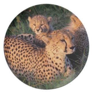 Africa, Kenya, Masai Mara Game Reserve. Cheetah 2 Plate