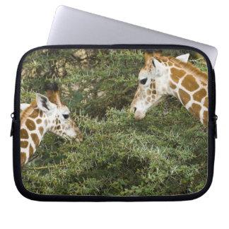 Africa. Kenya. Rothschild's Giraffes at Lake Laptop Sleeve