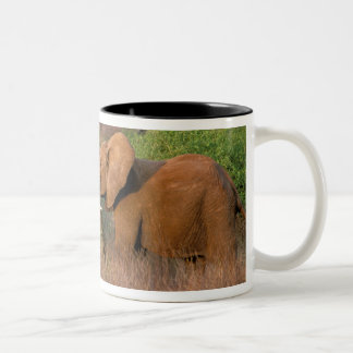 Africa, Kenya, Samburu. Elephant challenge Two-Tone Coffee Mug