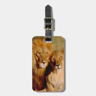 Africa, Namibia, Okonjima. Lion & lioness Luggage Tag