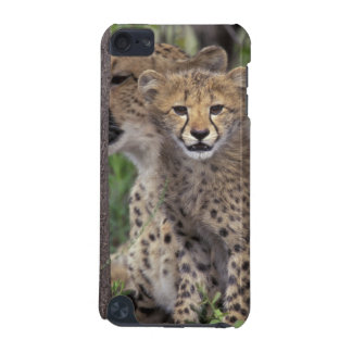 Africa, South Africa, Phinda Preserve. Cheetah iPod Touch (5th Generation) Cases