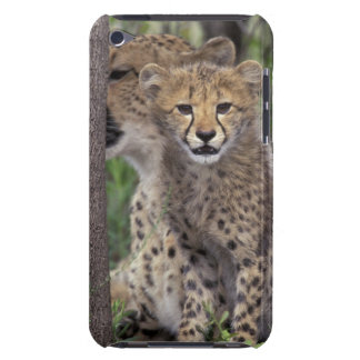 Africa, South Africa, Phinda Preserve. Cheetah iPod Touch Cover
