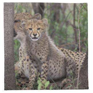Africa, South Africa, Phinda Preserve. Cheetah Napkin