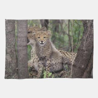 Africa, South Africa, Phinda Preserve. Cheetah Tea Towel