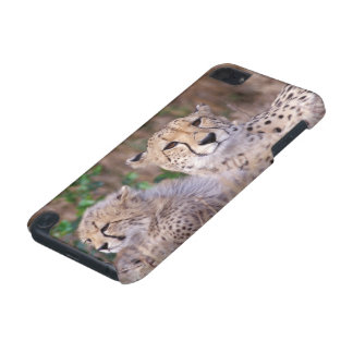 Africa, South Africa, Tswalu Reserve. Cheetahs iPod Touch 5G Cover
