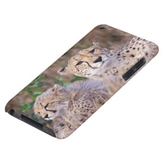 Africa, South Africa, Tswalu Reserve. Cheetahs iPod Touch Case