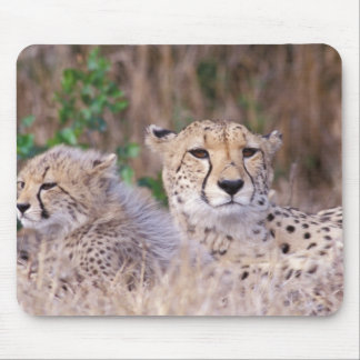 Africa, South Africa, Tswalu Reserve. Cheetahs Mouse Pad