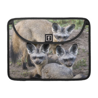 Africa. Tanzania. Bat-Eared Foxes at Ndutu in Sleeve For MacBooks