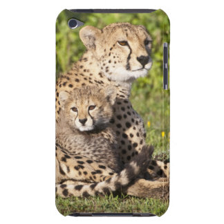 Africa. Tanzania. Cheetah mother and cubs 2 iPod Case-Mate Cases