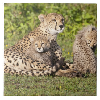 Africa. Tanzania. Cheetah mother and cubs 2 Large Square Tile
