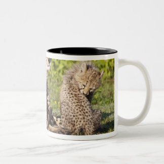 Africa. Tanzania. Cheetah mother and cubs 2 Two-Tone Coffee Mug