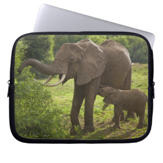 Africa. Tanzania. Elephant mother and calf at 2 Laptop Sleeve