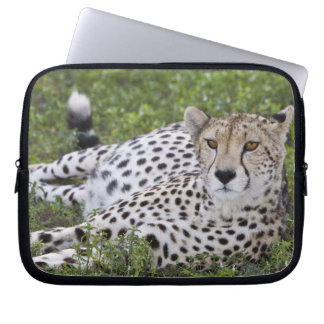 Africa. Tanzania. Female Cheetah at Ndutu in the Laptop Sleeve