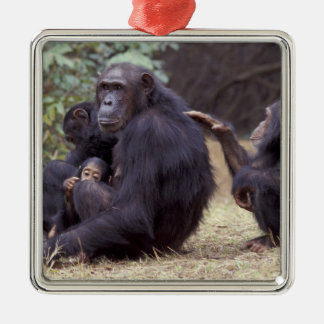 Africa, Tanzania, Gombe NP Infant female Christmas Ornament