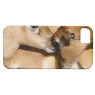 African antelope and fawn iPhone 5 cases