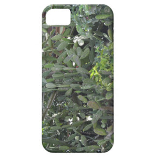 African cactus case for the iPhone 5