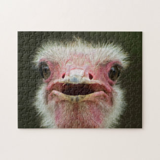 African Common Ostrich Wildlife Puzzle