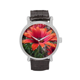 African Daisies Watch